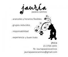 Paseo de perros en Zona Oeste (haedo-ramos mejia)